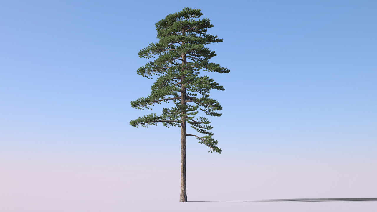 FORESTER EXPANSION 1 PRODUCTION TREES LIBRARY - 3DQUAKERS